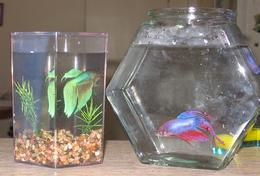 Becky's and my fishies