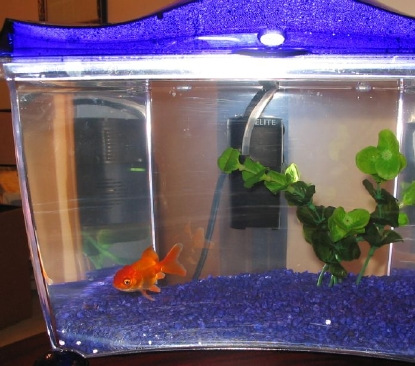 Image gallery my goldfish for How often should you clean a fish tank